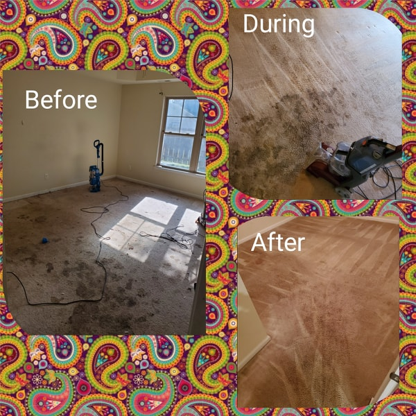 Heavy carpet cleaning 2